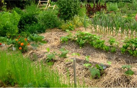jardin-ecologique-naturel