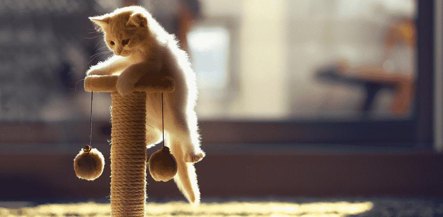 Bien accueillir un chaton