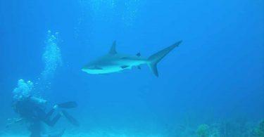 où faire de la plongée aux bahamas