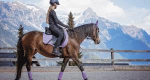Accessoires indispensables pour l'équitation
